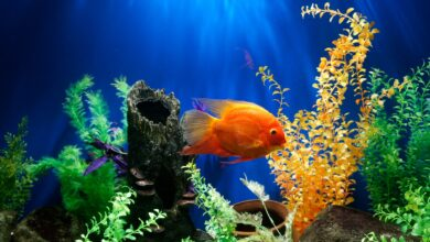 Photo of All You Need to Know Before Getting an Aquarium