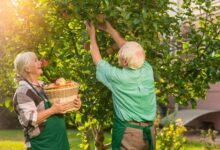 Photo of How to Keep Your Backyard Trees Healthy – 2020 Guide