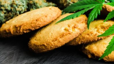 Photo of 8 Reasons to Try CBD Edibles