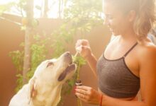 Photo of 6 Reasons Why CBD Oil Can Improve Your Pets Health