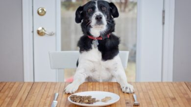 Photo of Freshly Baked is Always Better with Dog Treats