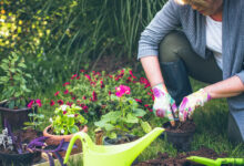 Photo of Gardening for Better Health
